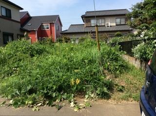 草刈り (1.).JPG
